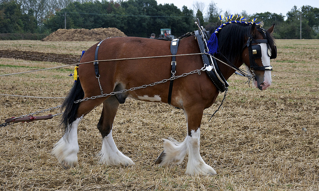 Work horse